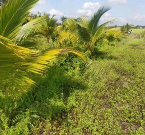 500m2 đất trồng dừa xã Lợi Bình Nhơn, TP. Tân An, Long An